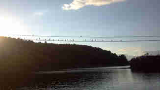 Birds on the cross river lines in Penobscot Bay, near Castine Maine