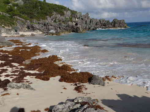 A Bermudian beach gets visited by Voyager crew after the Marion to Bermuda sailing race, 2013.