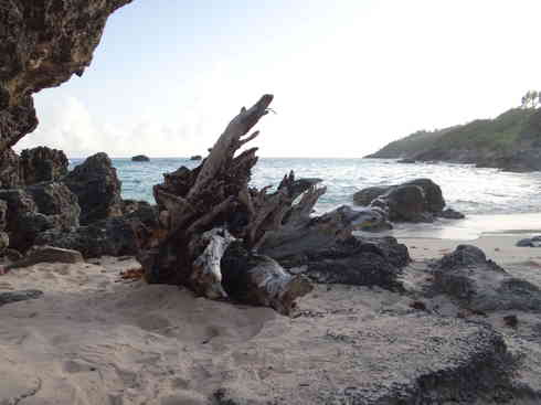 Some interesting driftwood is spotted on a Bermudian beach, after Voyager completed the Marion to Bermuda sailing race in 2013.