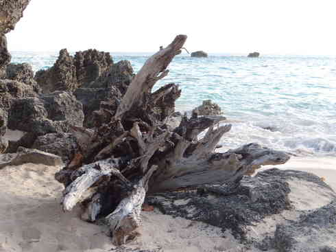 Close-up and different angle of driftwood on a Bermudian beach, after Voyager completed the Marion to Bermuda sailing race in 2013.