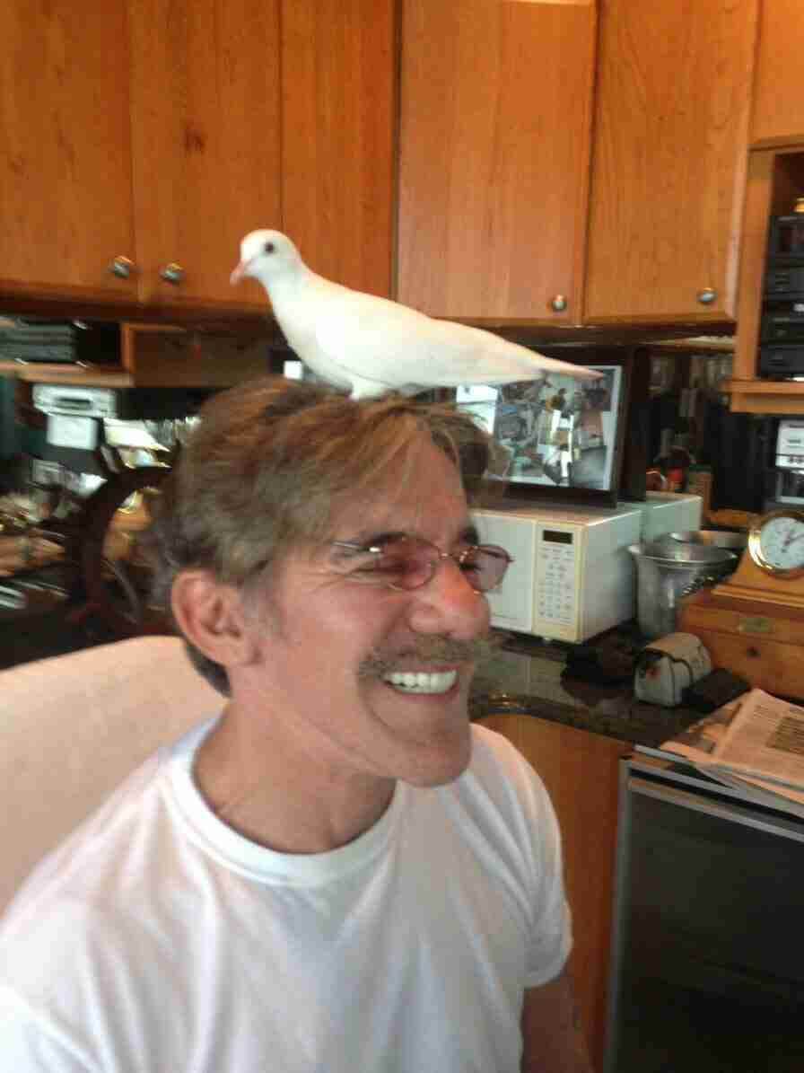 Geraldo with his rescued dove Tweets in Edgewater, New Jersey.  'Never An Empty Nest'